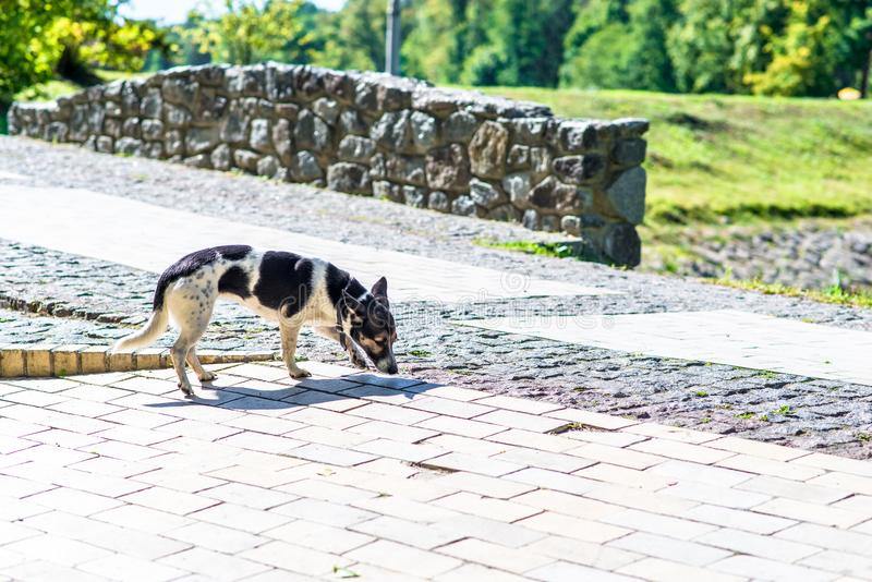 Gelukkige hond in het park stock foto's