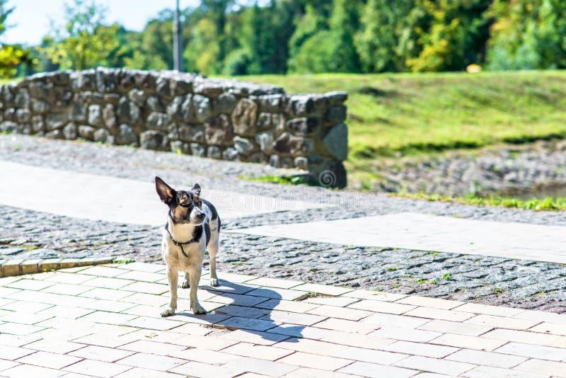 Gelukkige hond in het park stock afbeeldingen