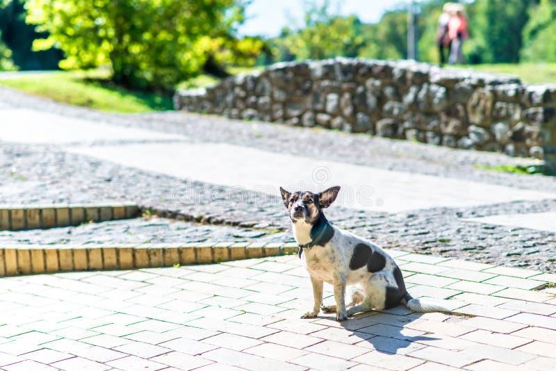 Gelukkige hond in het park stock foto