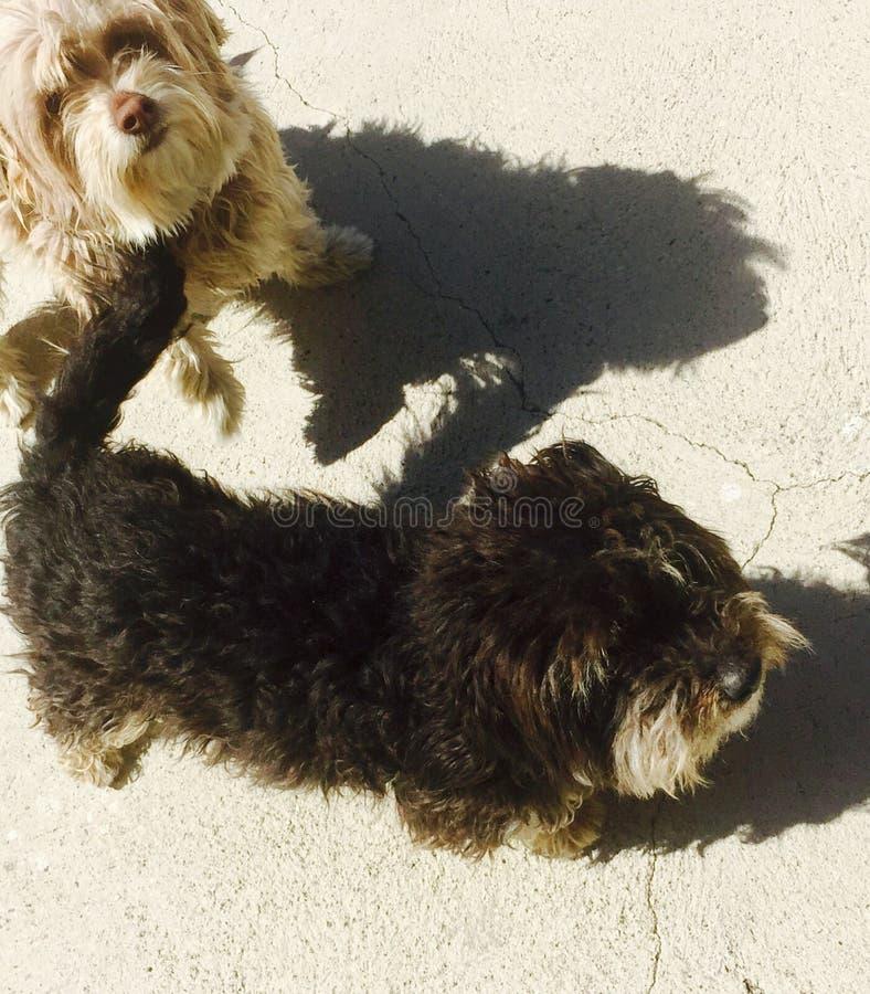 Gelukkige Honden royalty-vrije stock afbeeldingen