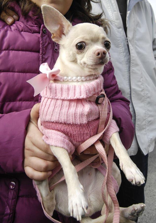 Gelukkige honden San Anton royalty-vrije stock afbeelding