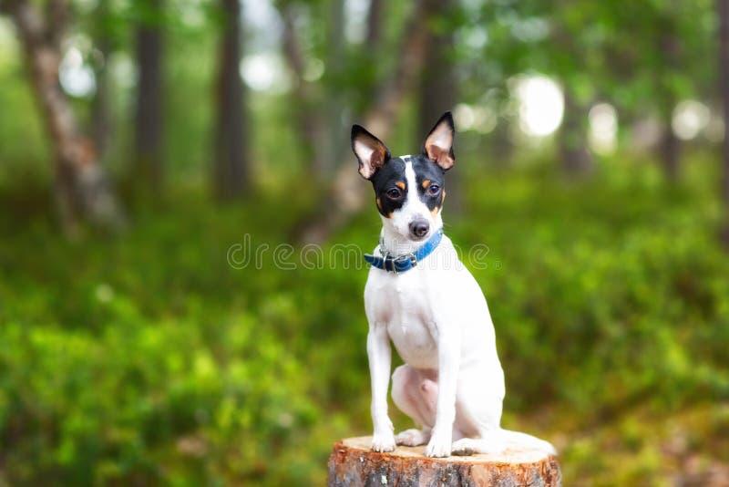 Gelukkige hondzitting op een stomp en het bekijken camera Hond bij het groene blad van de de zomerboom in weide met exemplaarruim stock foto