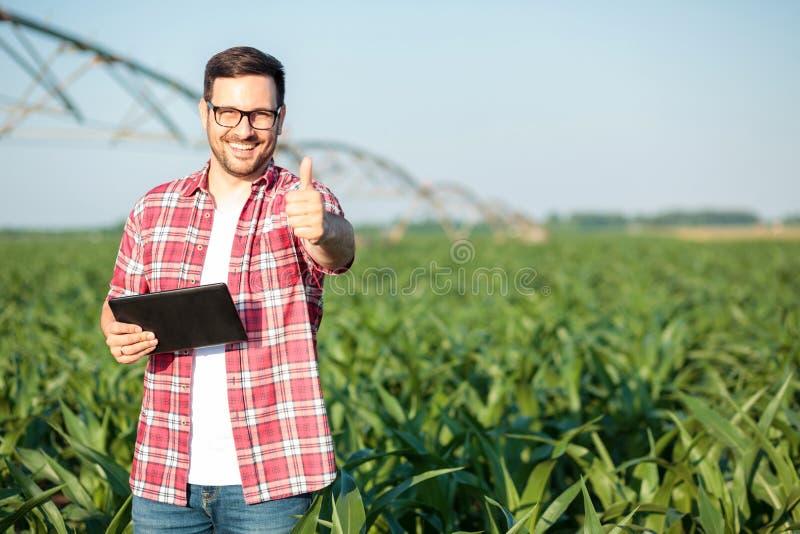 Gelukkige jonge landbouwer of agronoom die duimen tonen en direct bij camera glimlachen, die zich op zoete maïsgebied bevinden royalty-vrije stock afbeeldingen