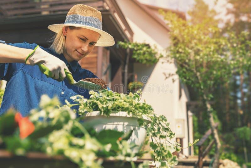 Gelukkige jonge vrouw die de zomerbloemen in pot planten stock foto