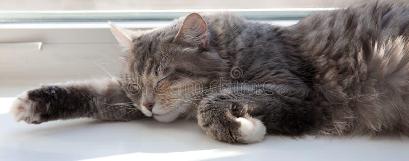 Gelukkige Katten stock fotografie