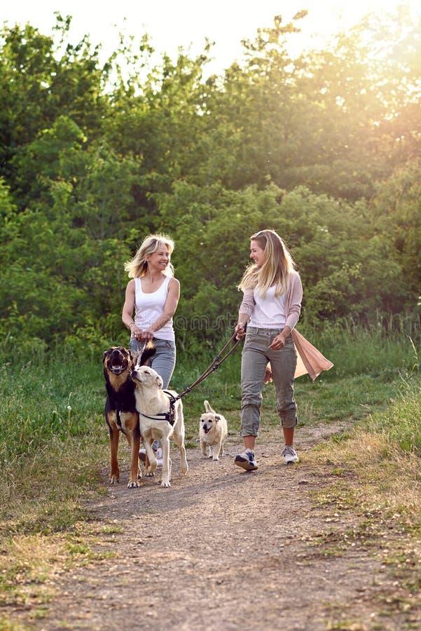 Gelukkige lachende jonge vrouwen die hun honden lopen royalty-vrije stock foto's