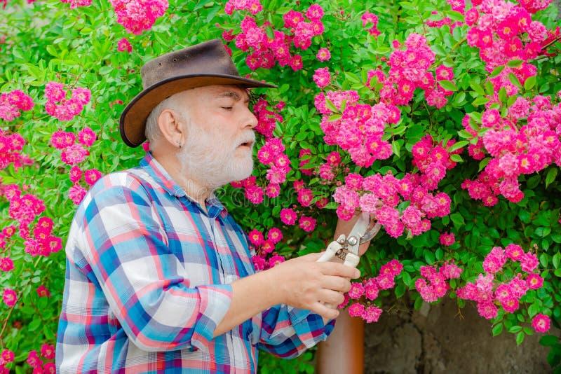 Gelukkige landbouwer in cowboyhoed die pret op gebied hebben Pensionering Planning grootvader Tuinman scherpe bloemen in zijn tui stock afbeeldingen