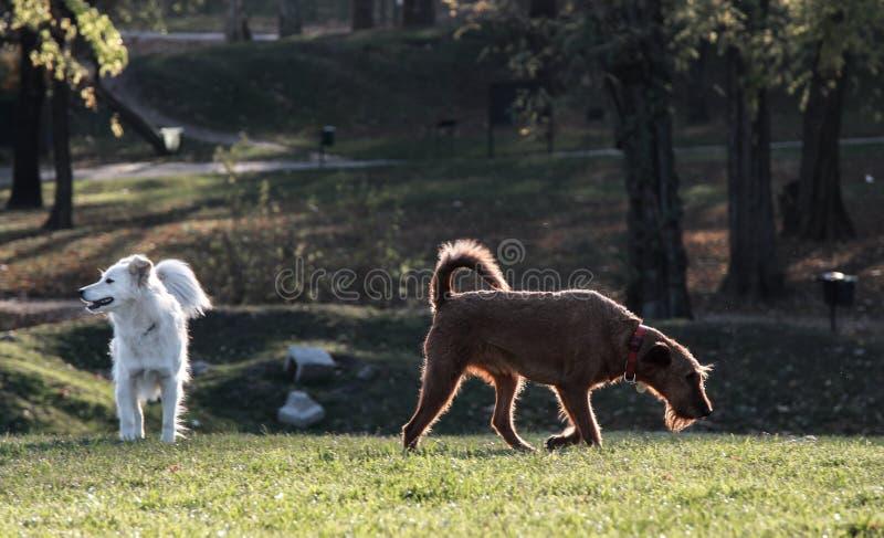 Gelukkige, leuke, het spelen honden in zonsondergang stock afbeeldingen
