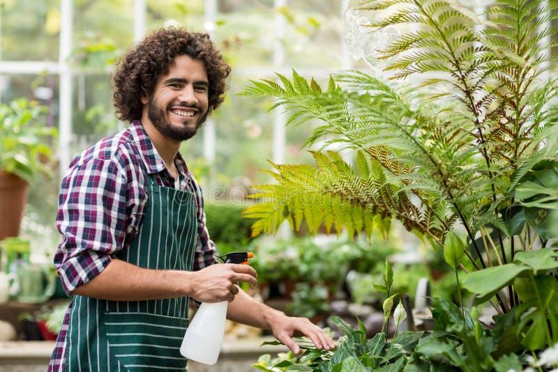 Gelukkige mannelijke tuinman het water geven installaties stock afbeeldingen