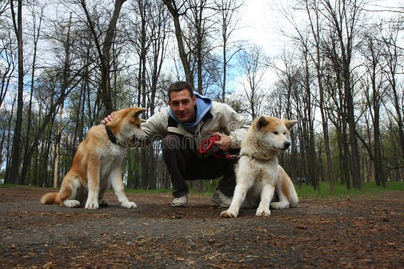 Gelukkige mens met twee honden stock afbeeldingen