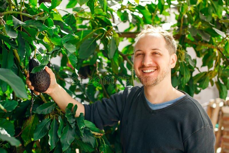 Gelukkige mens in zijn tuin die een rijpe avocado tonen stock afbeeldingen