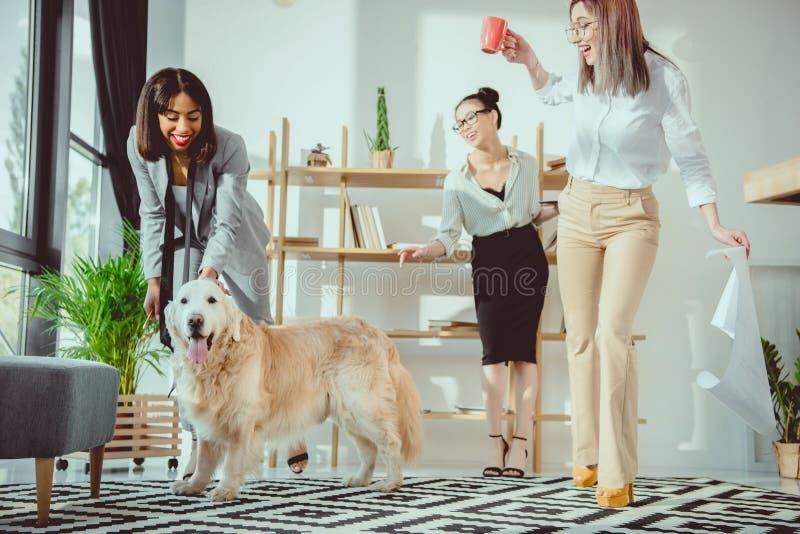 gelukkige multi-etnische onderneemsters die rond met hond voor de gek houden stock foto's