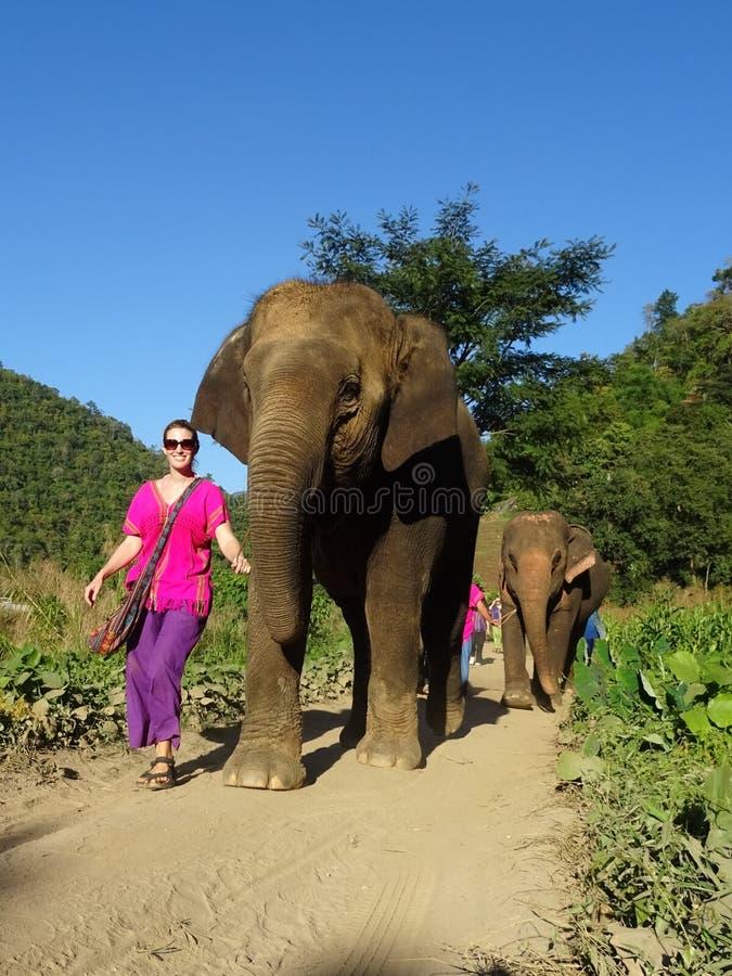 Gelukkige olifanten royalty-vrije stock afbeelding