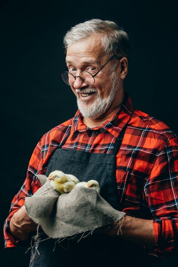 Gelukkige oude landbouwer die een doek met kippen houden stock foto's