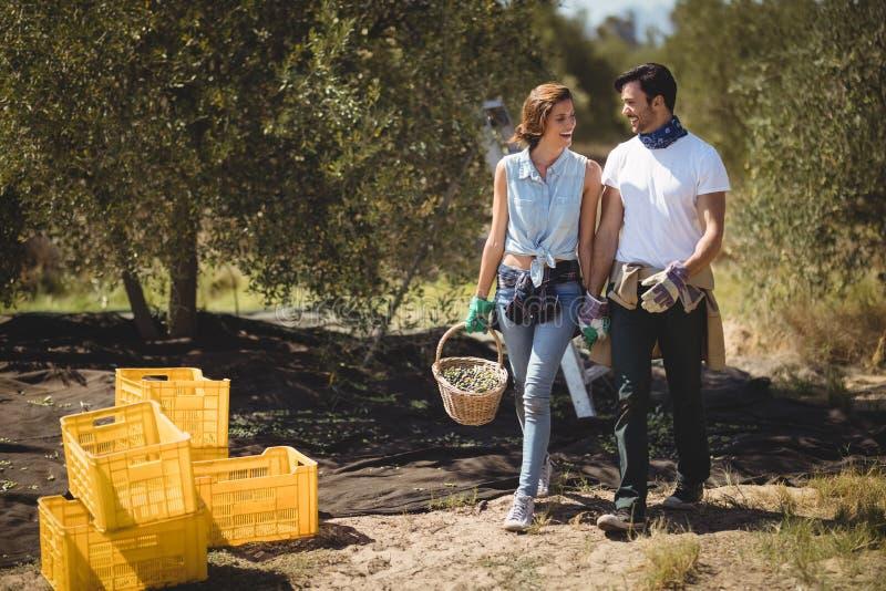 Gelukkige paar dragende olijven in mand bij landbouwbedrijf op zonnige dag stock foto's