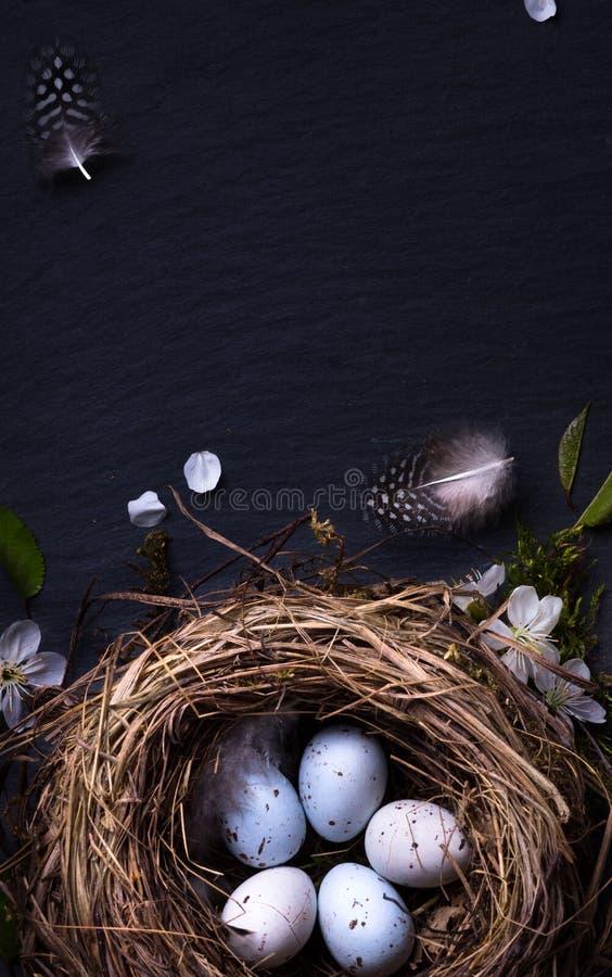 Gelukkige Pasen; Paaseieren in nest en de lentebloem op lijst