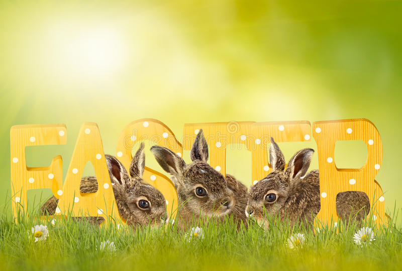 Gelukkige Pasen; Pasen-konijntje royalty-vrije stock afbeeldingen