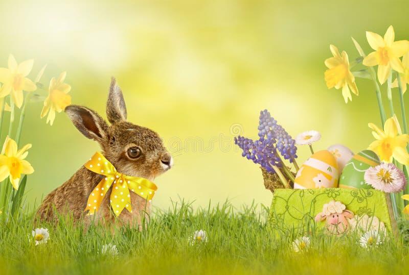 Gelukkige Pasen; Pasen-konijntje royalty-vrije stock fotografie