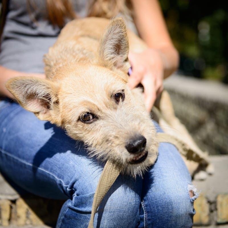 Gelukkige rode puppyhond stock foto's