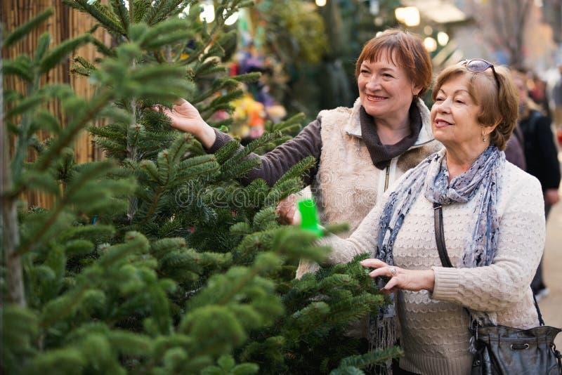 Gelukkige tevreden bejaarden die sparren selecteren stock fotografie
