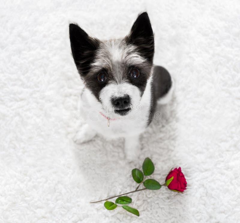 Gelukkige valentijnskaartenhond stock fotografie