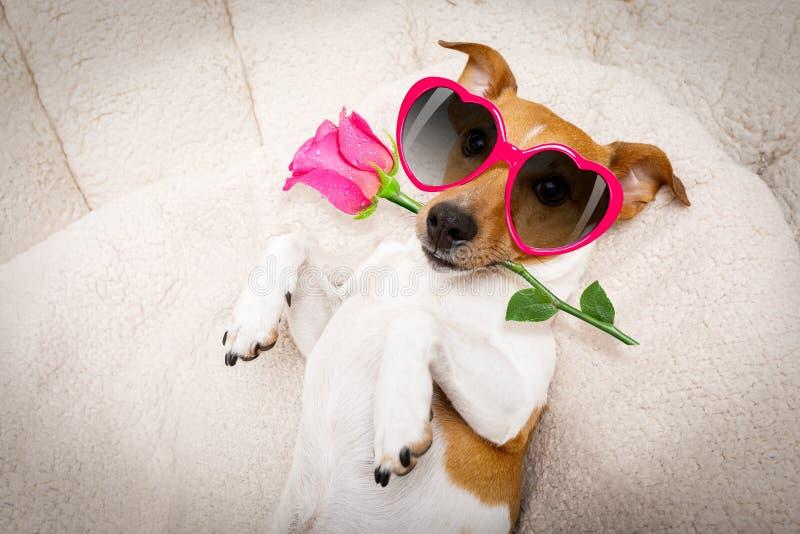 Gelukkige valentijnskaartenhond royalty-vrije stock afbeeldingen