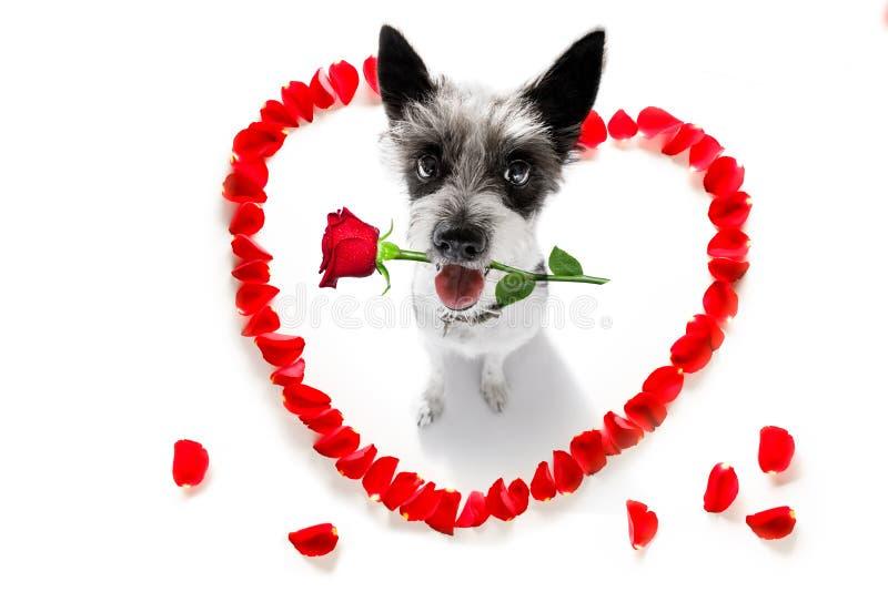 Gelukkige valentijnskaartenhond stock afbeeldingen