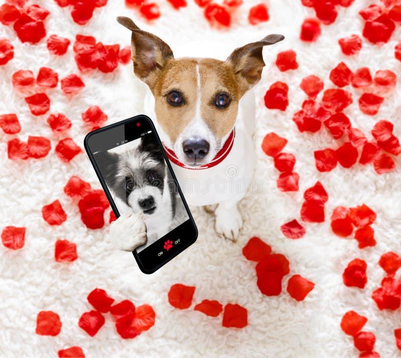 Gelukkige valentijnskaartenhond selfie royalty-vrije stock afbeelding