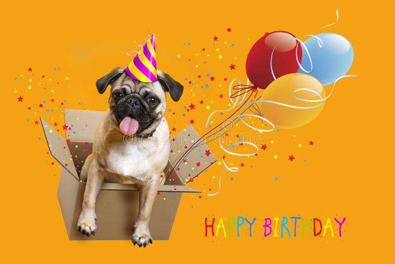 Gelukkige Verjaardag Hondpug in een doos, ballons stock foto's