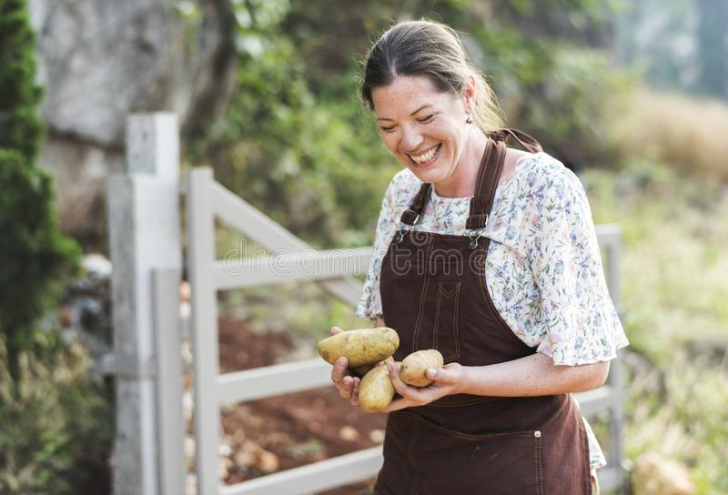Gelukkige vrouw die aardappels verzamelen bij een landbouwbedrijf royalty-vrije stock fotografie