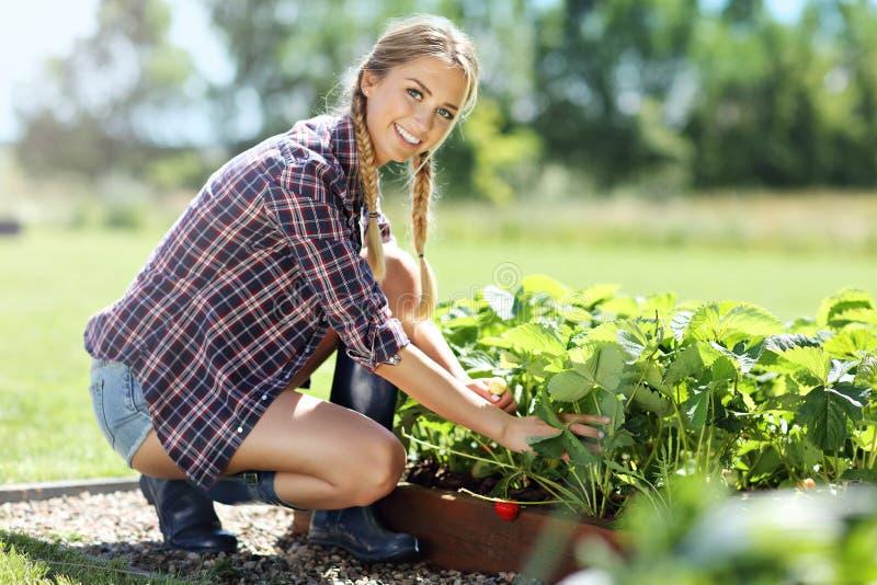 Gelukkige vrouw die verse aardbeien in de tuin verzamelen stock foto's