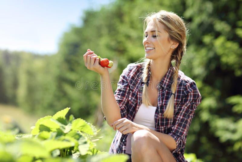 Gelukkige vrouw die verse aardbeien in de tuin verzamelen royalty-vrije stock foto's