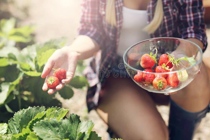 Gelukkige vrouw die verse aardbeien in de tuin verzamelen stock fotografie