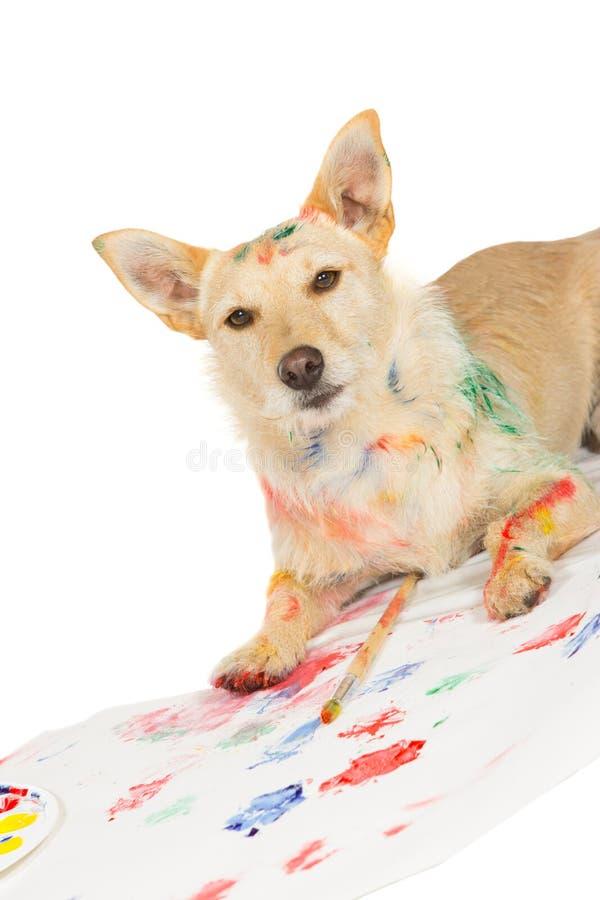 Gelukkige waakzame hondkunstenaar stock foto