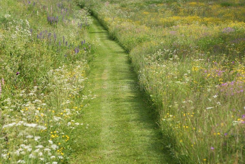 Gemähter Weg durch wilde Blumen-Wiese stockbild