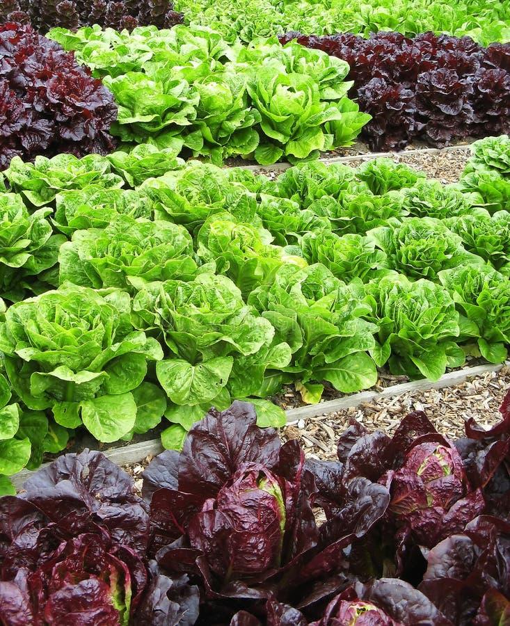Gemüse in der Zuteilung stockfotos