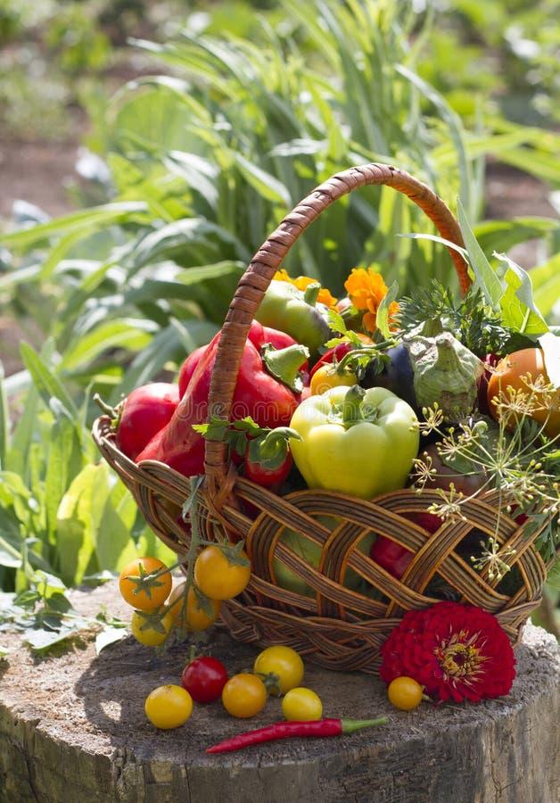Gemüse in einem Weidenkorb stockfoto