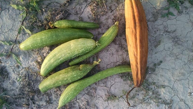 Gemüse im Dorf lizenzfreies stockfoto