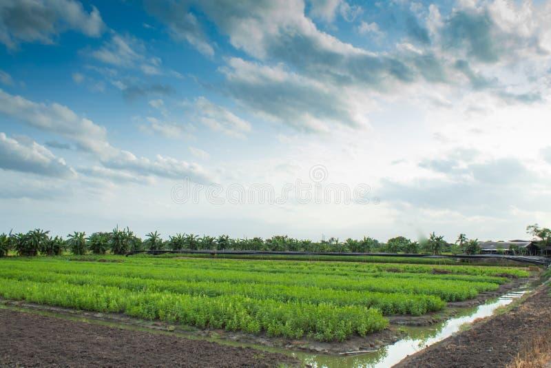Gemüse am Kanal stockfoto