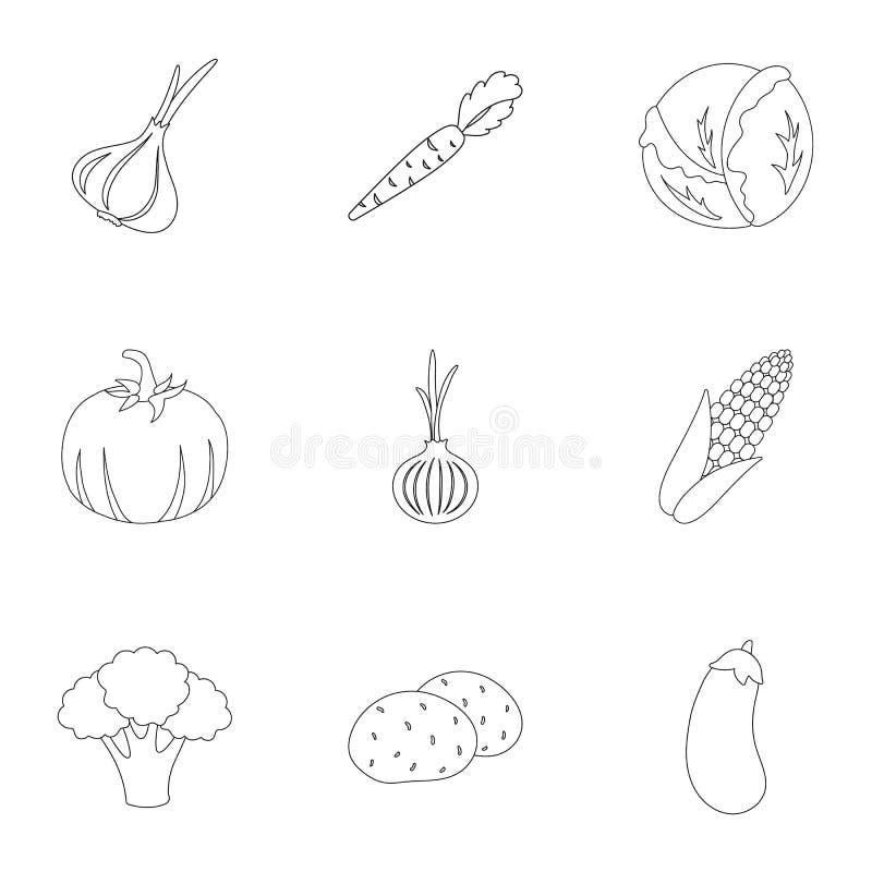 Gemüse stellte Ikonen in der Entwurfsart ein Große Sammlung der Gemüseillustration vektor abbildung