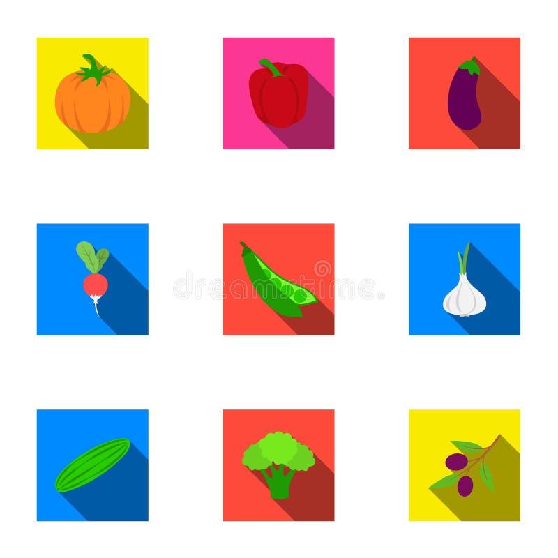 Gemüse stellte Ikonen in der flachen Art ein Große Sammlung des Gemüsevektorsymbols vektor abbildung