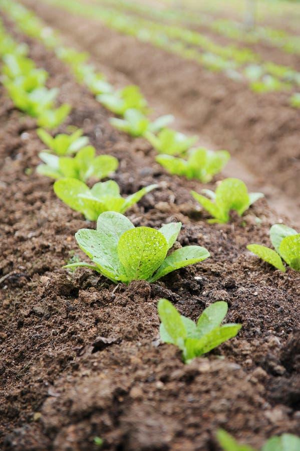 Gemüsebauernhof stockbilder
