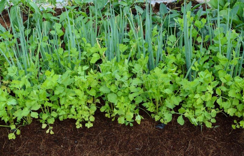 Gemüsegarten des umweltfreundlichen Hinterhofes stockbilder