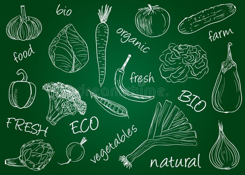 Gemüsegekritzel - Schulbehörde stock abbildung