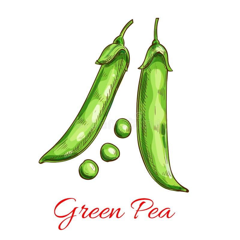 Gemüseskizze der grünen Erbse mit frischer Hülse, Korn stock abbildung