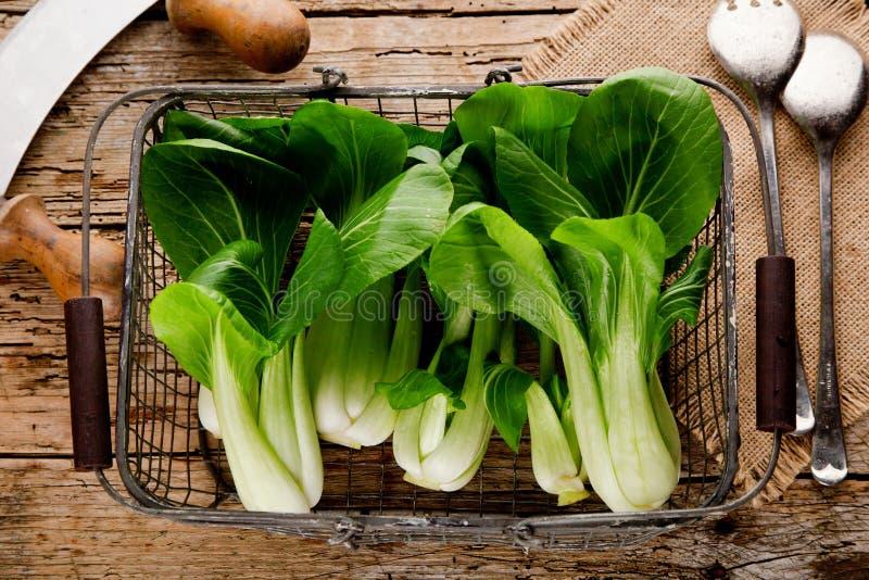 Gemüsezusammenstellung, frischer grüner Chinakohl, bok choy, pok Choi oder PAK Choi auf dunklem Hintergrund lizenzfreie stockfotos