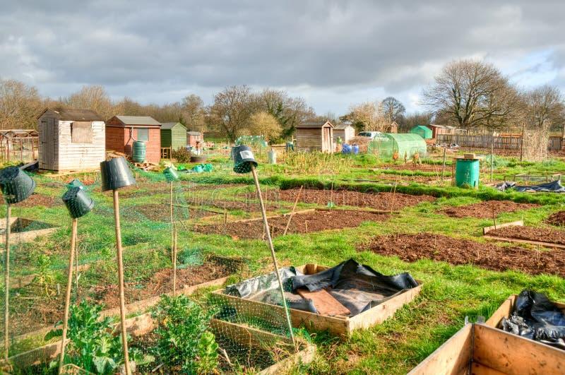 Gemüsezuteilungen stockbild