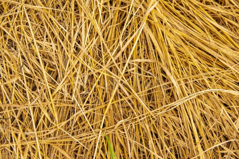 Gemaaid droog gras - achtergrondafbeelding stock foto