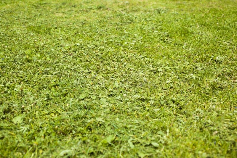 Gemaaid jong gras op de speelplaatsachtergrond stock fotografie