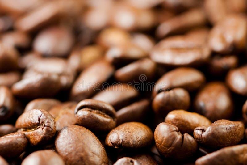 Gemahlen frisch Kaffeebohnen gebraten mit den Fr?chten der Kaffeeanlage, voll von den K?rnern lizenzfreie stockfotos
